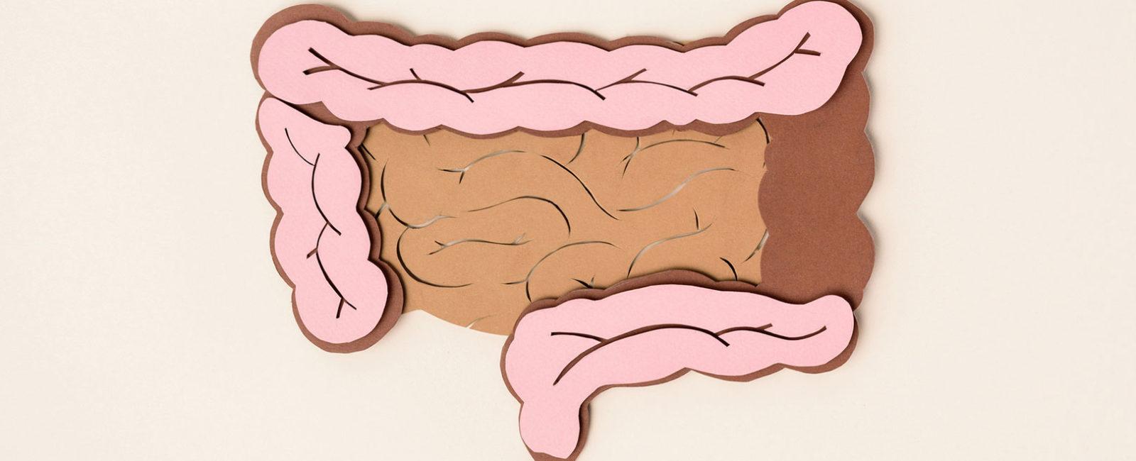 Gute und schlechte Bakterien in deinem Darm