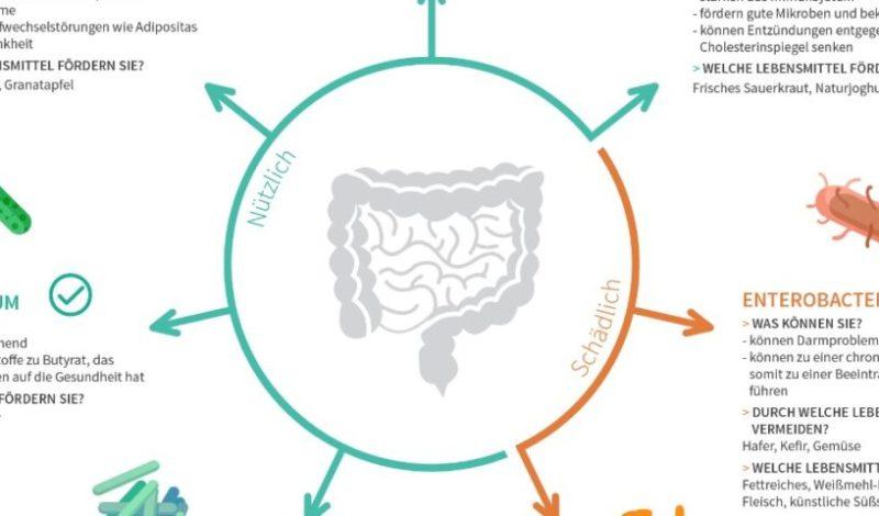 Infografik nuetzliche Bakterien